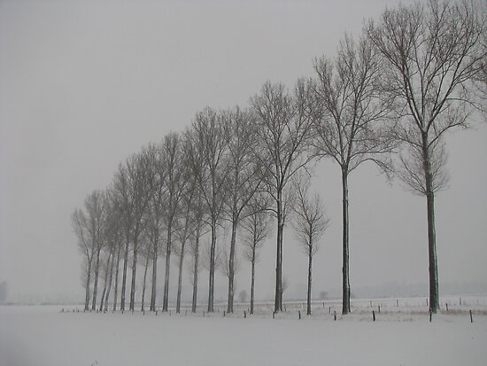 Trees waiting in line by Sanne Thijs