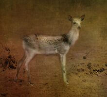 Fawn by Catherine Hamilton-Veal  ©