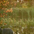 Lake Louise Allure by Dawne Olson