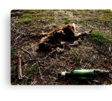 Dead Kangaroo with beer bottle Canvas Print
