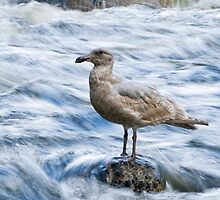 Standing Still in the River's Rush by Tracy Riddell