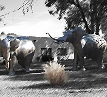 Elephant Walk by Steve Hunter