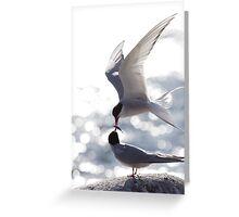 Arctic terns 2 Greeting Card