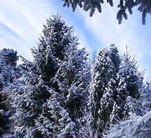 Winter wonderland  by pingie