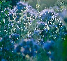 Fairy - tale  blue & blue  flax.  by Brown Sugar, Views (818)  . Dziękuję !!!! tvm..cu18r ! by © Andrzej Goszcz,M.D. Ph.D