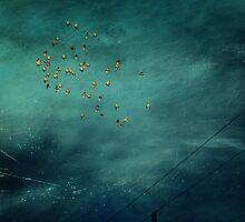 Birds by Sharon Heiz