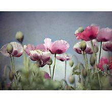 ~ Painted Ladies ~ Photographic Print