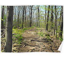 Dappled Path Poster