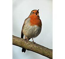 Robin Singing Photographic Print