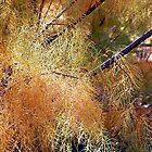 Bosque Brush by Loree McComb