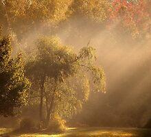 Rays of Hope by Gisele Bedard
