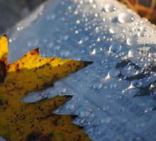 After the Rain by Alley Aber