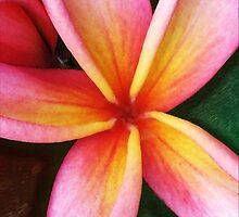 Pink and Yellow Plumeria by Shannon Underwood