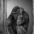 Hear no evil - Gorilla covering ears by jegi52001