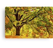 Golden Oak Tree  Canvas Print