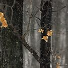 Snowing in the Woods, Dunrobin Ontario by Debbie Pinard
