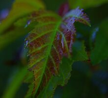 leaf dew by StoneAge