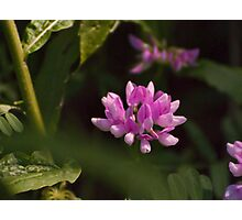 Floating Wildflower Photographic Print