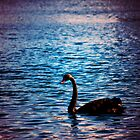 The Black Swan by bcboscia410