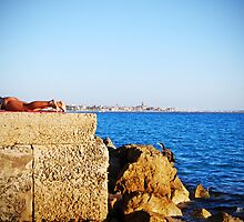 Heron stands rigid like an old old man - Alghero by Ferdinand Lucino