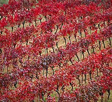 Vineyards in red by Fran0723