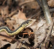Slither by Randy Wolfgram