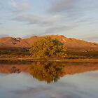 Warm Reflection by JBoyer