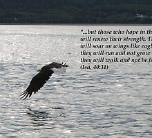 Hope Series: Isa. 40:31 by hummingbirds