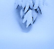 Small fir tree in the snow by intensivelight