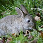 A Wild Baby Rabbit by MendipBlue