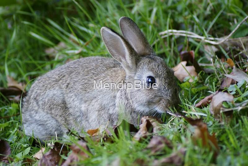 Newborn Wild Rabbit | www.imgkid.com - The Image Kid Has It!