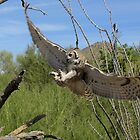 Great Horned Owl ~ 6 months old by Kimberly P-Chadwick