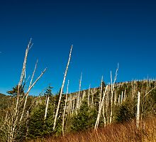 View from Clingmans Dome! by vasu