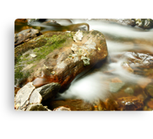 Leaf & Rock at Torc Metal Print