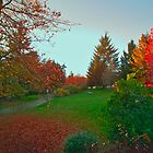 Vancouver Park in Autumn 21 by Priscilla Turner