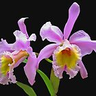 Lavender Orchids by Usha Ganesh