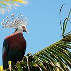 Victoria Crowned Pigeon, Papua New Guinea by Erik Schlogl
