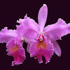 Orchids by Usha Ganesh