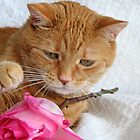 Cat & Rose by Usha Ganesh