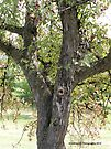 Crabapple Tree Structure  by Barberelli