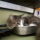 SID in his Roasting Pan on the Stove by Rick Gold