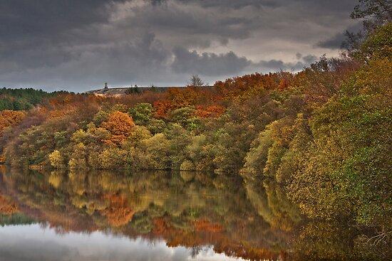 Darwen Tower from an autumnal Roddlesworth wood by Shaun Whiteman