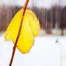 Melancholic leaf by natans