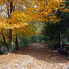 A Autumn Trail by kkphoto1