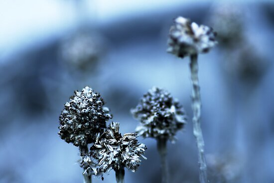 Waiting for Spring (blue 1) by Bob Daalder