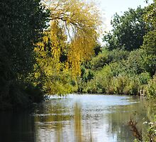 Kennet Canal  by Barry  Spear