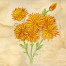 Marigolds over Coffee by Anne Gitto