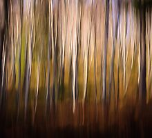 Streaky Trees by Christopher Thomson