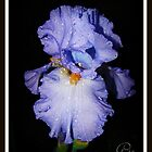 Delicate Droplets on Blue by Gail Jones