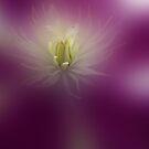 Inner Sanctum by enchantedImages